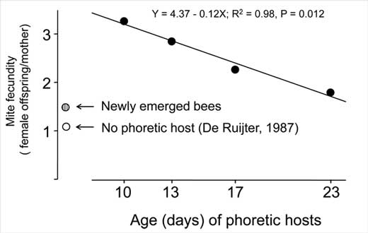 Negative relationship between mite fecundity and age of phoretic hosts