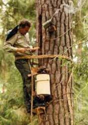 Tree Beekeeping - Reviving a lost tradition