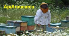 Beekeeping Information from Araucania Chile