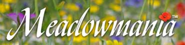 meadowmania flowers
