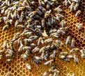 World Bee Day: Are we ignoring biodiversity risks in the same way we ignored the pandemic ?