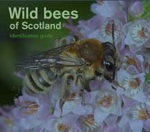 Wild bees of Scotland